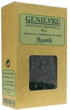 Genièvre (Juniperus communis)